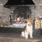 Albert the house dog at High Blean B&B Askrigg warms his back by the embers of the fire