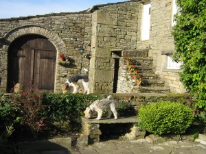 Albert & Victoria Wire haired Fox Terriers on the wall of High Blean B&B Semerwater, betwixt Askrigg, Hawes and Bainbridge, Yorkshire Dales