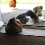 Albert the dog, the house dog at High Blean Bed and Breakfast Raydale Bainbridge Yorkshire Dales